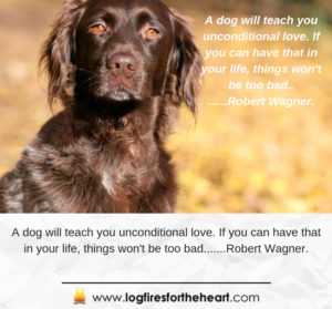 a dog will teach you unconditional love. If you have that in your life then things won't be so bad - Robert Wagner