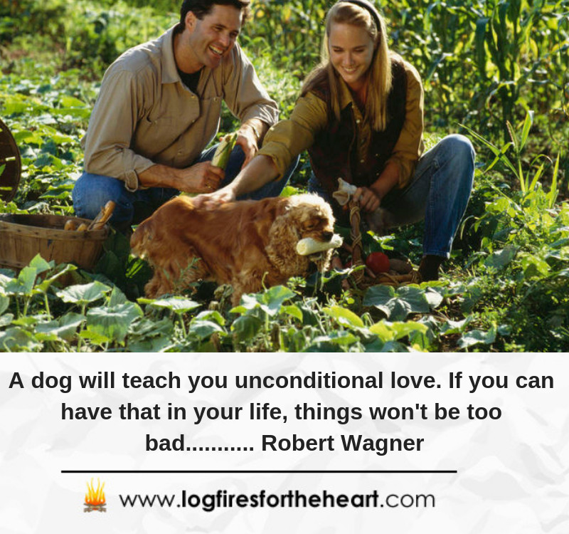 A dog will teach you unconditional love. If you can have that in your life, things won't be too bad........... Robert Wagner
