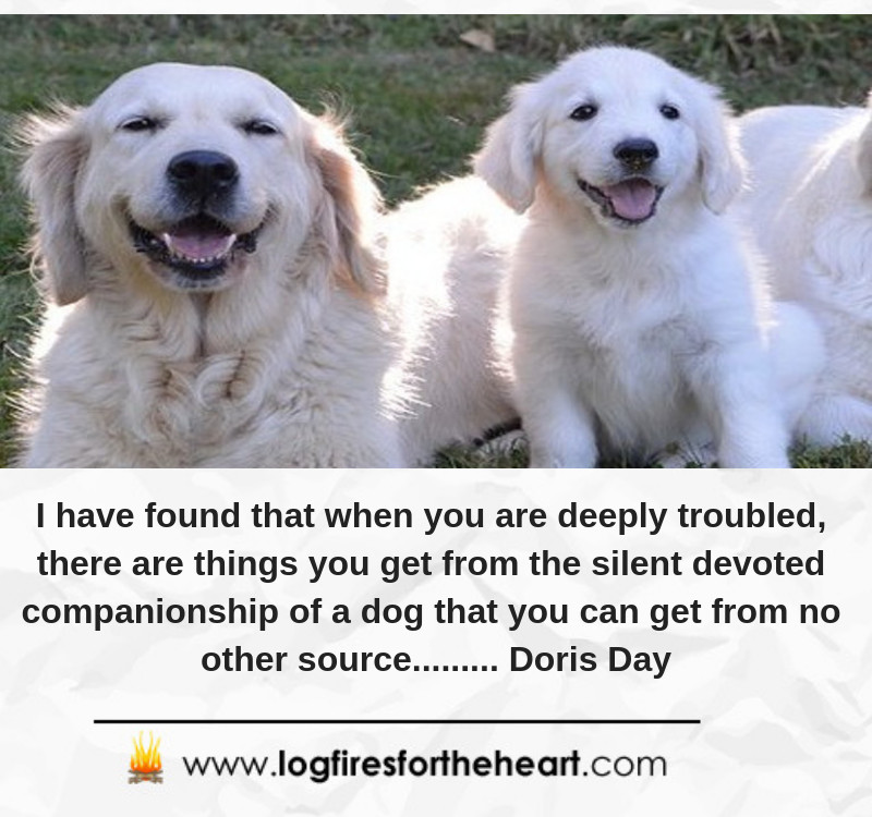 I have found that when you are deeply troubled, there are things you get from the silent devoted companionship of a dog that you can get from no other source......... Doris Day