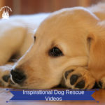 Inspirational Dog Rescue Video – Please Help Save More Lives