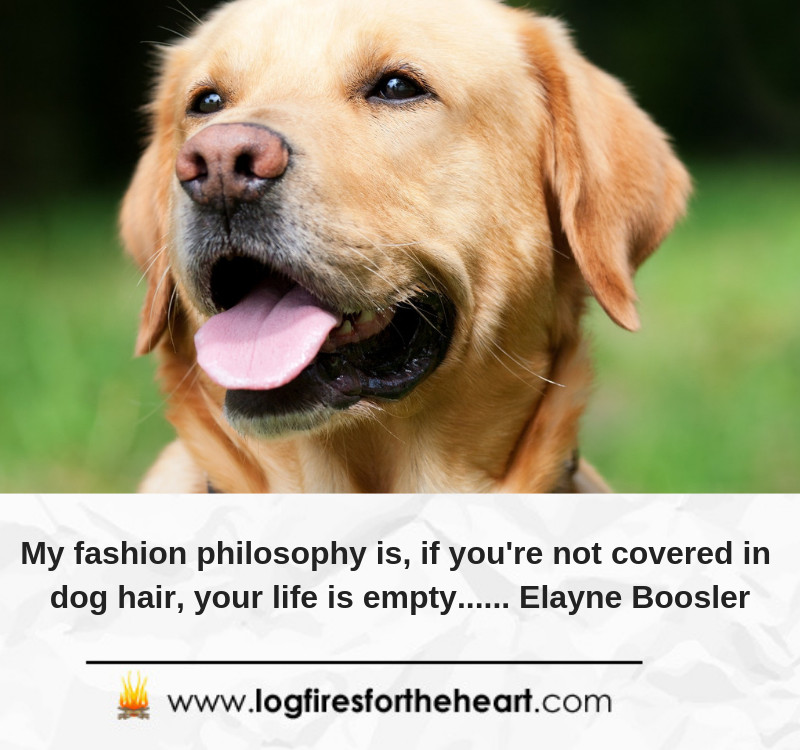 My fashion philosophy is, if you're not covered in dog hair, your life is empty...... Elayne Boosler