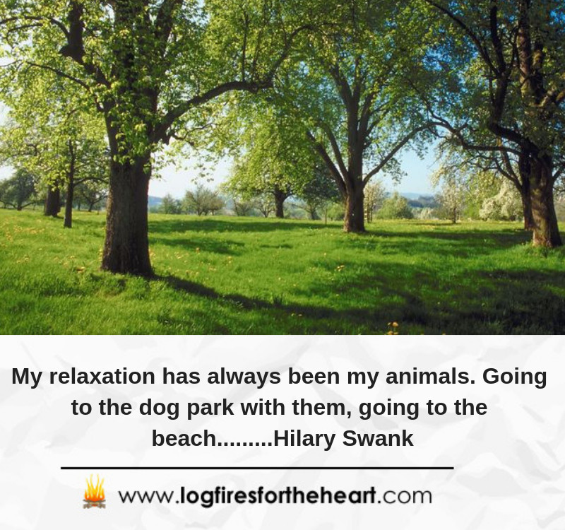 My relaxation has always been my animals. Going to the dog park with them, going to the beach.........Hilary Swank