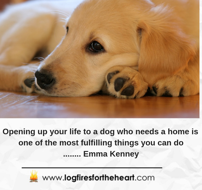 Opening up your life to a dog who needs a home is one of the most fulfilling things you can do........ Emma Kenney