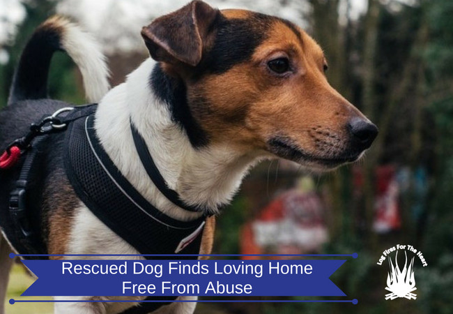 Rescued Dog Finds Loving Home Free From Abuse