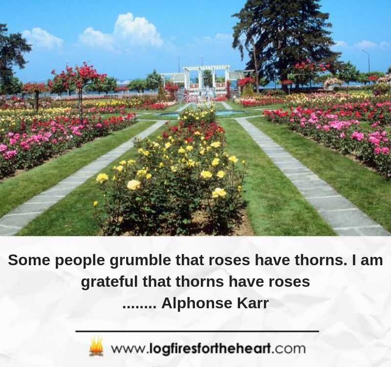 Some people grumble that roses have thorns; I am grateful that thorns have roses..... Alphonse Karr