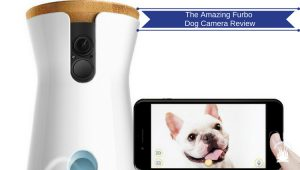 The Amazing Furbo Dog Camera  - Seen On The Popular Ellen Show