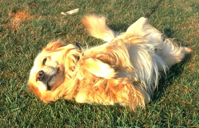 Hilary Swank - Dog Lover