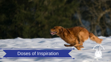 Doses of Inspiration For Dog Lovers