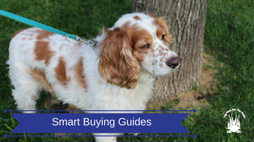 Smart Buying Guides For Dog Lovers